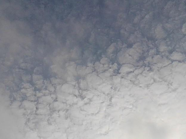 鱗雲(11月26日)