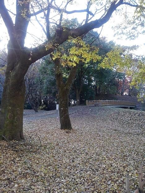 落ち葉のカーペットの奥に陸橋(11月22日)