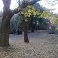 Photos: 落ち葉のカーペットの奥に陸橋(11月22日)