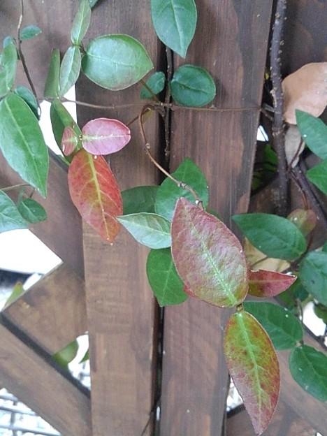 木の壁と葉(11月26日)