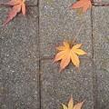 石畳と落ち葉(12月10日)