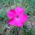 赤くて小さな花(12月5日)