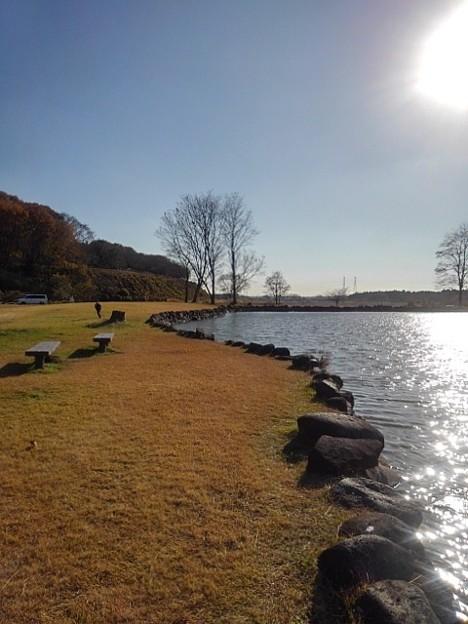 ゆうゆうパークの池(11月22日)