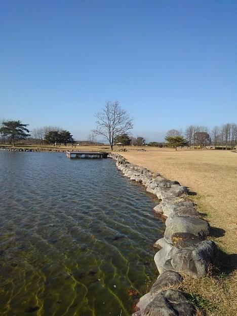ゆうゆうパークの綺麗な水辺(11月22日)
