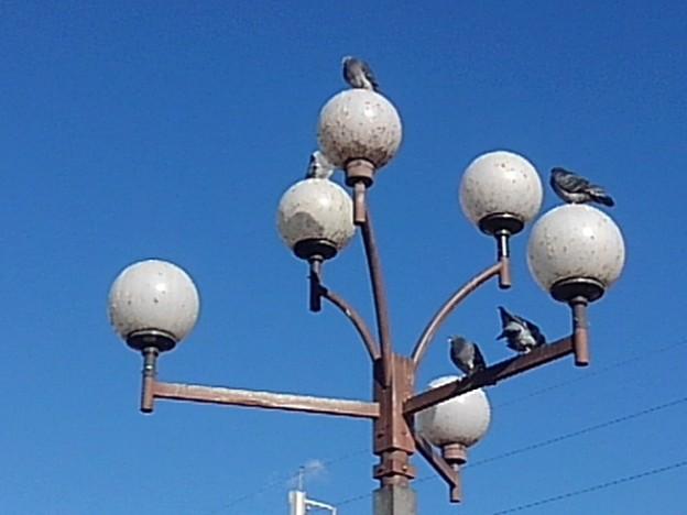 宇都宮駅前の電灯と鳩(12月4日)