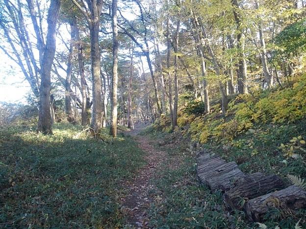 ゆうゆうパークの自然な丘の道(11月22日)