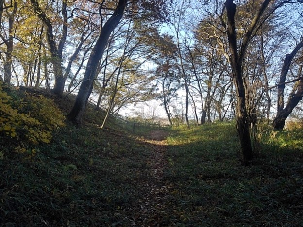 Photos: ゆうゆうパークの丘の木々の道(11月22日)