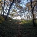 ゆうゆうパークの丘の木々の道(11月22日)