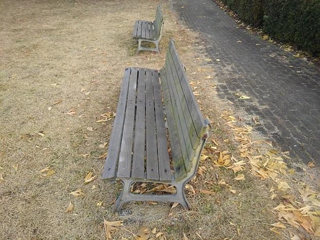 小さな公園のベンチと黄色い落ち葉(12月19日)
