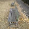 Photos: 小さな公園のベンチと黄色い落ち葉(12月19日)