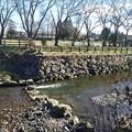 Photos: 石垣の土手と川の景色(12月8日)