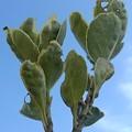 緑の葉と青空(12月9日)