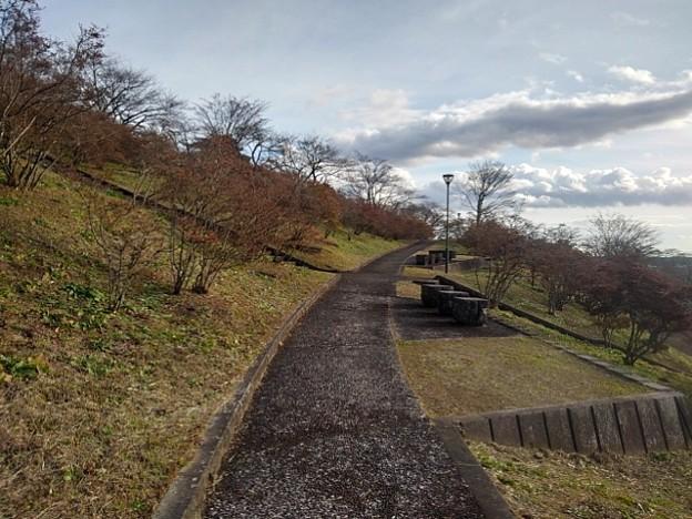 長峰公園の丘の石のベンチもある道(12月13日)