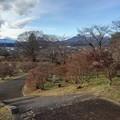 Photos: 長峰公園の丘の下り階段の道(12月13日)