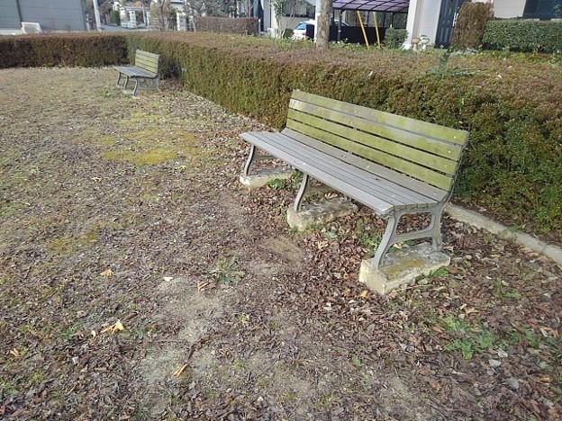 小さな公園のベンチと赤い落ち葉(12月19日)