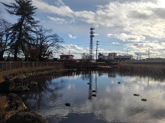 公園の池の映り込み(1月1日)