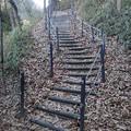 Photos: 川崎城跡公園の丘の階段(12月28日)