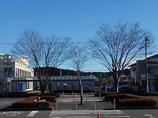 街路樹(12月25日)