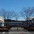 Photos: 街路樹(12月25日)