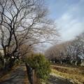 Photos: 川と並木(12月26日)