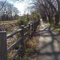 Photos: 川沿いの道(12月26日)