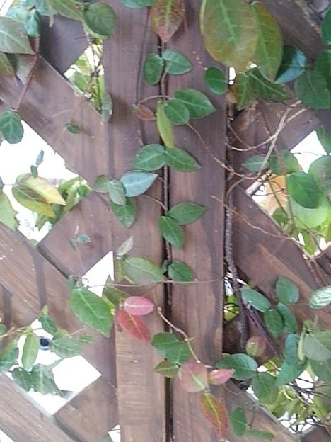 小さな葉と木の壁(1月10日)