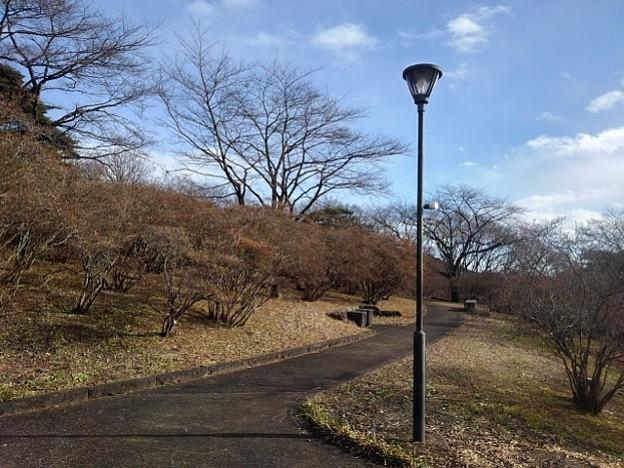 Photos: 石のベンチと電灯のある丘の道(1月1日)