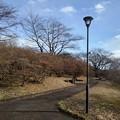 石のベンチと電灯のある丘の道(1月1日)