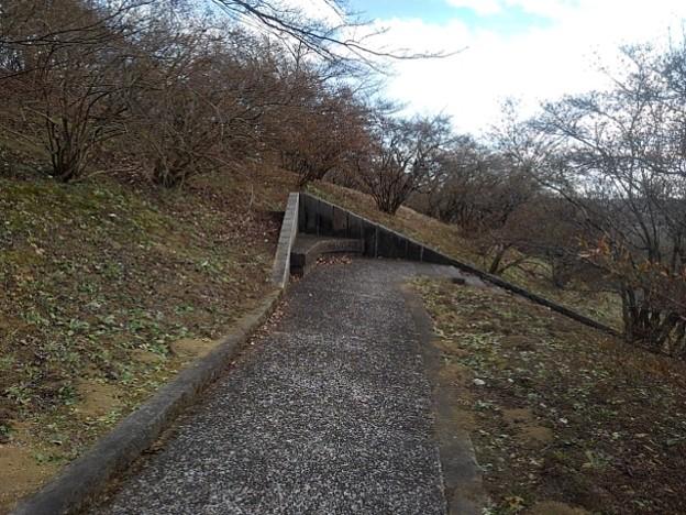 丘のベンチもあるなだらかな道(1月1日)