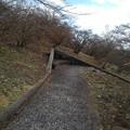 Photos: 丘のベンチもあるなだらかな道(1月1日)