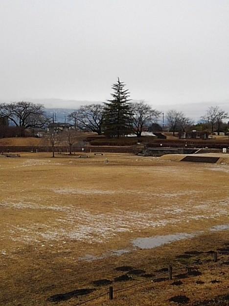 長峰公園の奥に木が見える広場(1月24日)