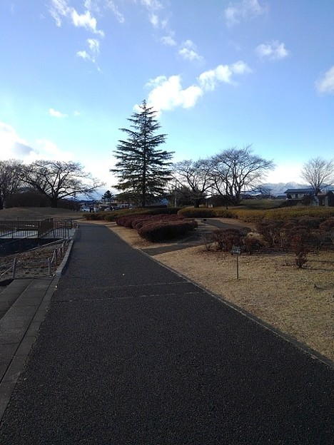 大きな木も見える長峰公園の道(1月1日)