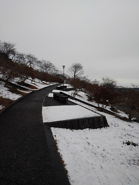 丘のベンチ(1月24日)