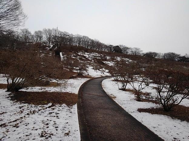 公園の緩やかな道(1月24日)