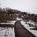 Photos: 公園の緩やかな道(1月24日)