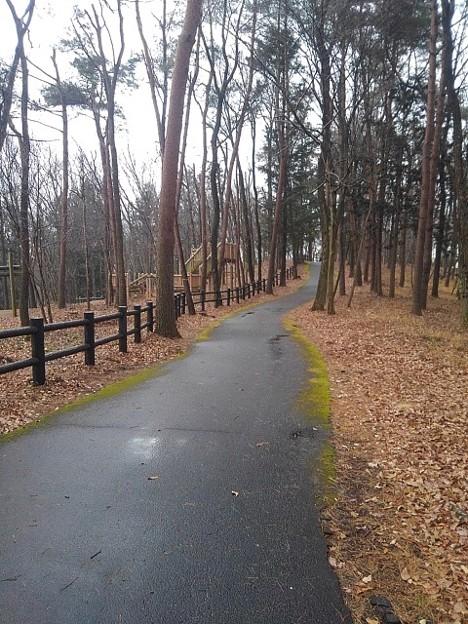 那須野が原公園の丘の道沿いの落ち葉と木製の柵(1月16日)