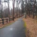 Photos: 那須野が原公園の丘の道沿いの落ち葉と木製の柵(1月16日)