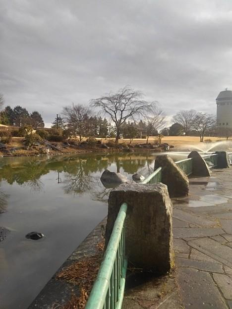 雨上がりの那須野が原公園の池(1月16日)