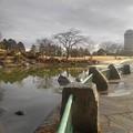 Photos: 雨上がりの那須野が原公園の池(1月16日)