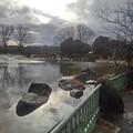 Photos: 映り込みもある那須野が原公園の池(1月16日)