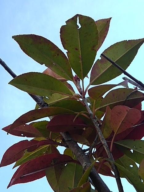 カラフルな葉(1月22日)