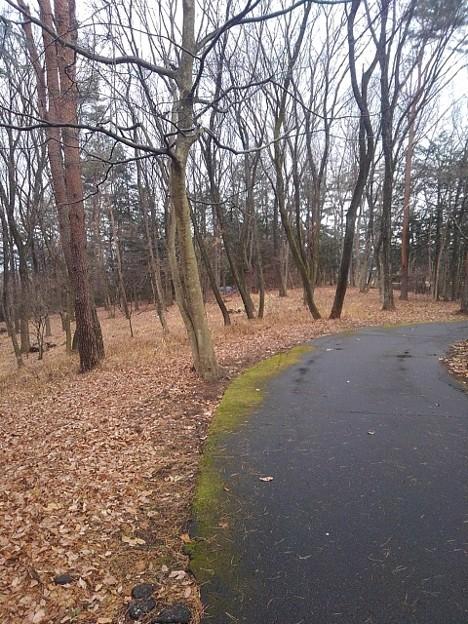 那須野が原公園の落ち葉が目立った丘の道(1月16日)