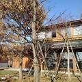 Photos: 道の駅やいたのエコモデルハウス(1月21日)