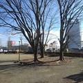 Photos: 公園の木(1月18日)