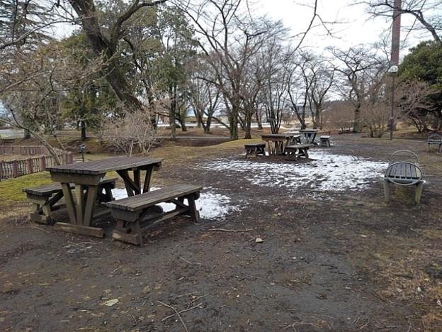 長峰公園のテーブル広場(1月24日) (1)
