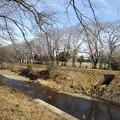 Photos: 川(1月26日)
