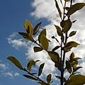 葉と空(2月3日)