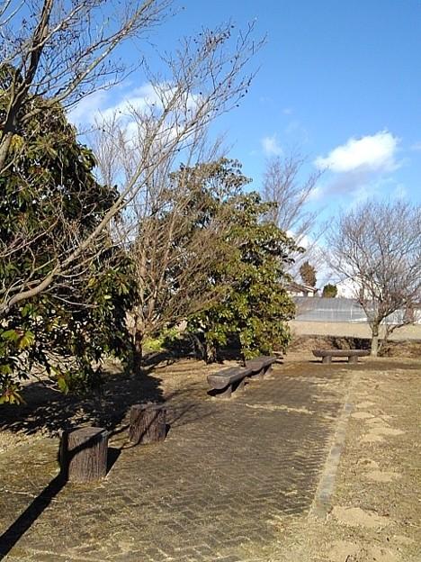 川崎城跡公園の広場(1月30日)