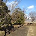 Photos: 川崎城跡公園の広場(1月30日)