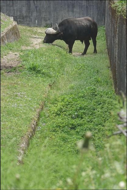 自分専用庭の草刈り中、サンバ君。@安佐